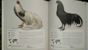 Das Huhn Innenansicht