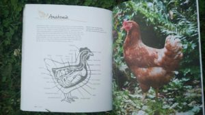 Hühner halten im Garten Innenansicht