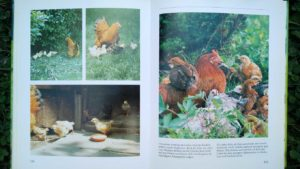 Hühner halten Innenansicht